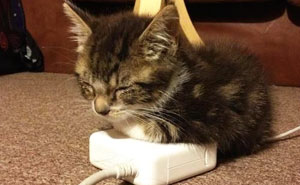 25+ Cats Who Love Warmth More Than Anything