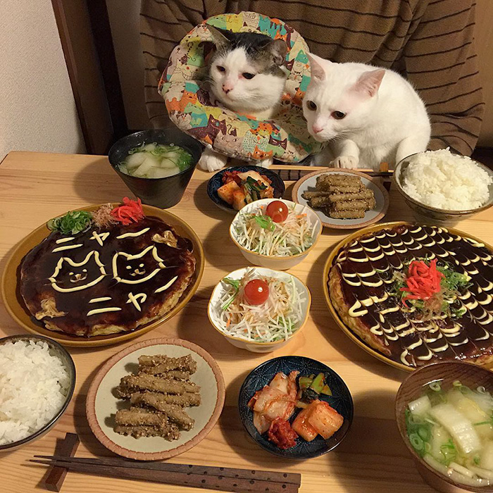 cats-watching-people-eat-naomiuno-10