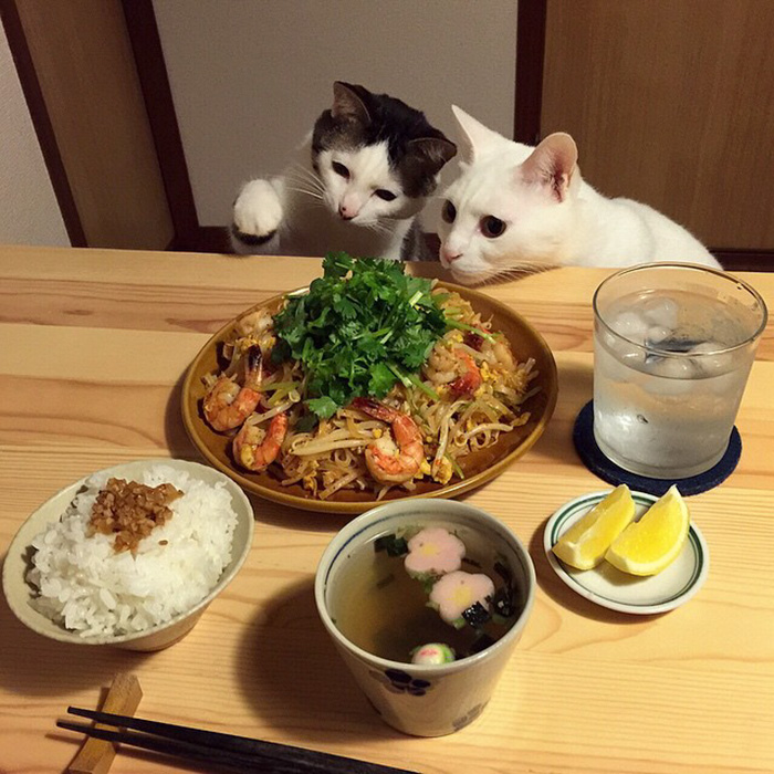cats-watching-people-eat-naomiuno-14