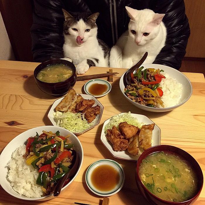 cats-watching-people-eat-naomiuno-16