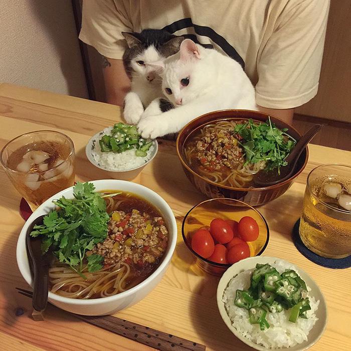 cats-watching-people-eat-naomiuno-2