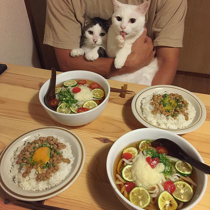 cats-watching-people-eat-naomiuno-3
