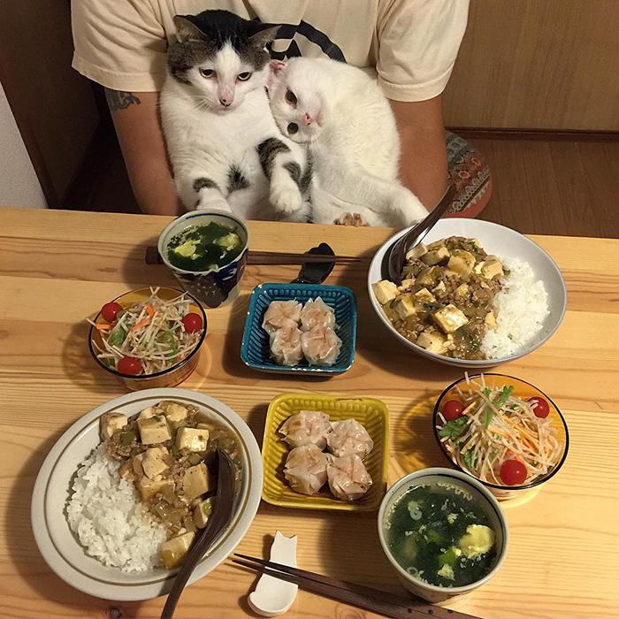 cats-watching-people-eat-naomiuno-4