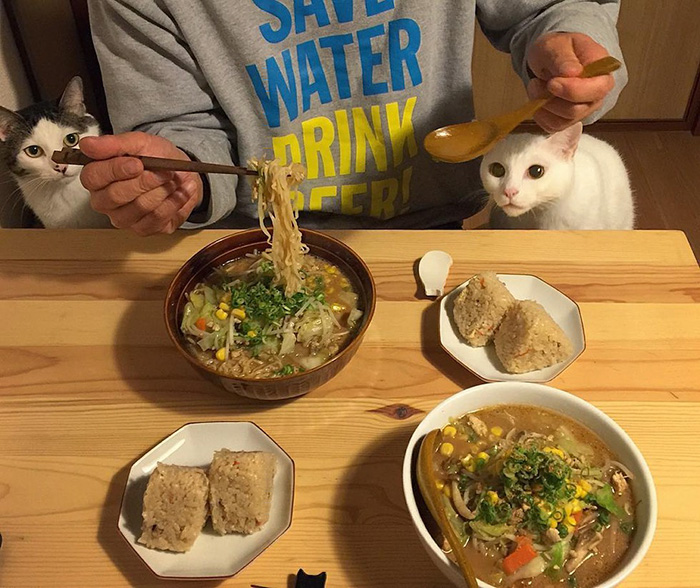 cats-watching-people-eat-naomiuno-7