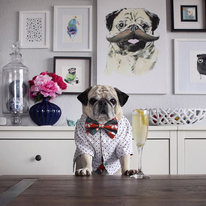 Cocktail Pug