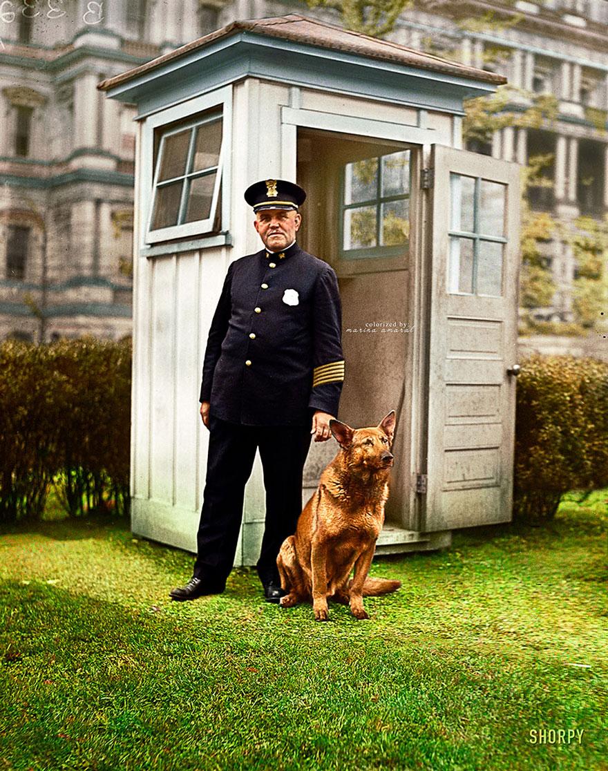 King Tut, President Hoover's Big German Police Dog