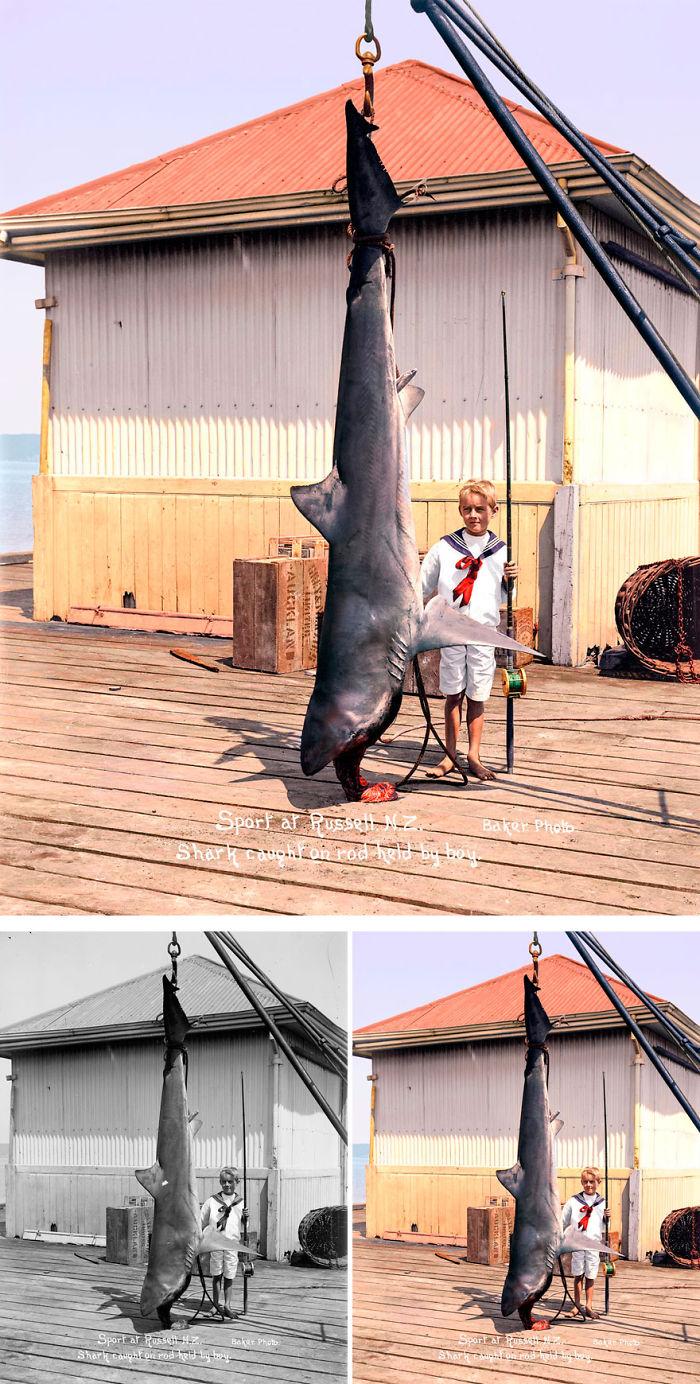 Shark Caught At Russell, 1915