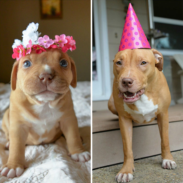 Abandoned Pup Celebrates The 1st Birthday No One Thought She Would Live To See
