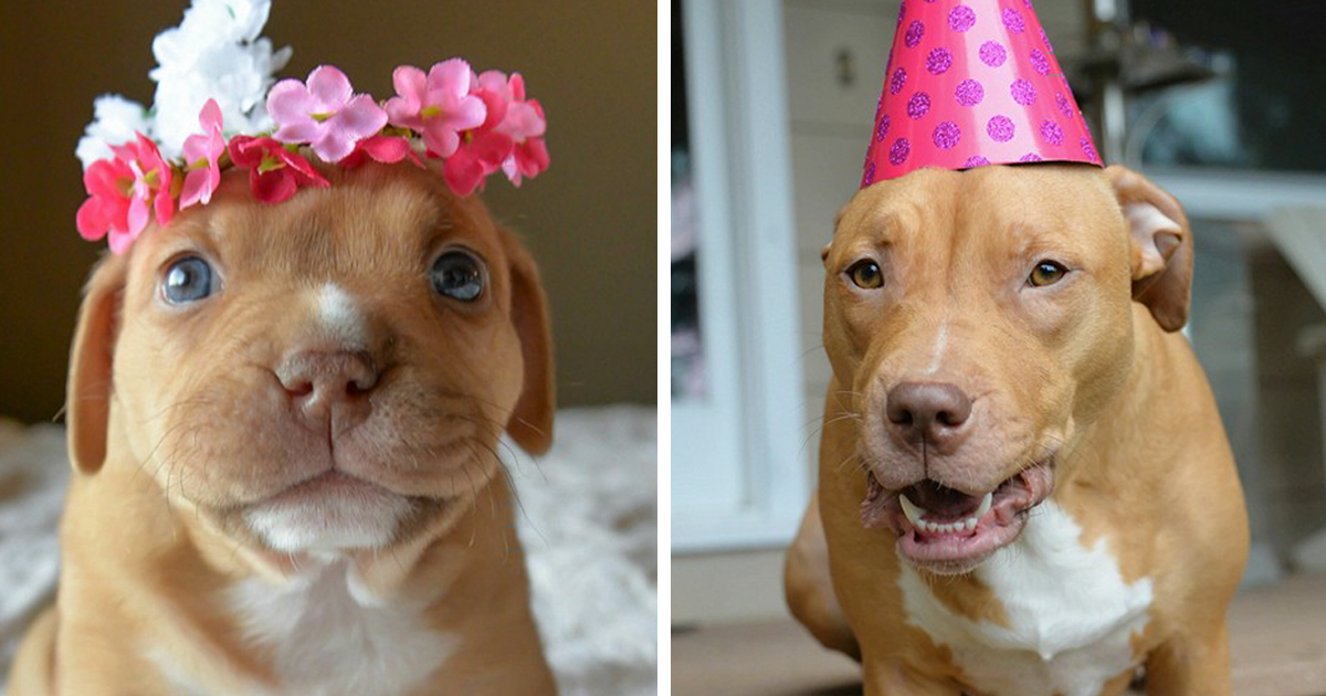 Abandoned Pup Celebrates The 1st Birthday No One Thought