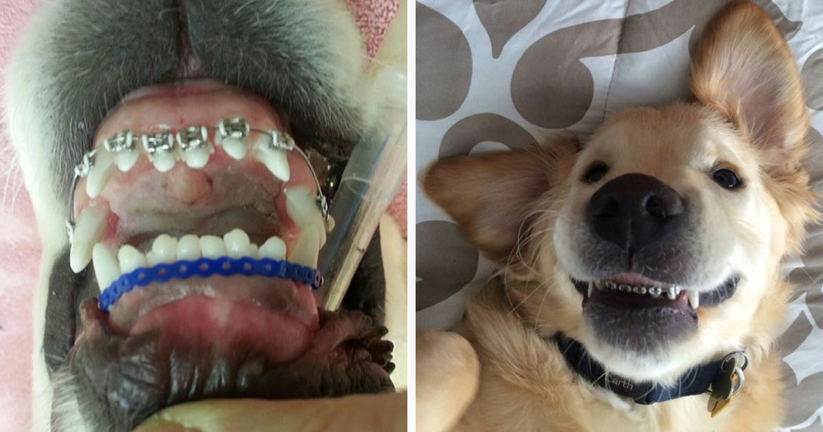 Treats For Dogs Without Teeth