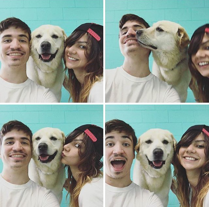 dog-cafe-adoption-sarah-wolfgang-los-angeles-12