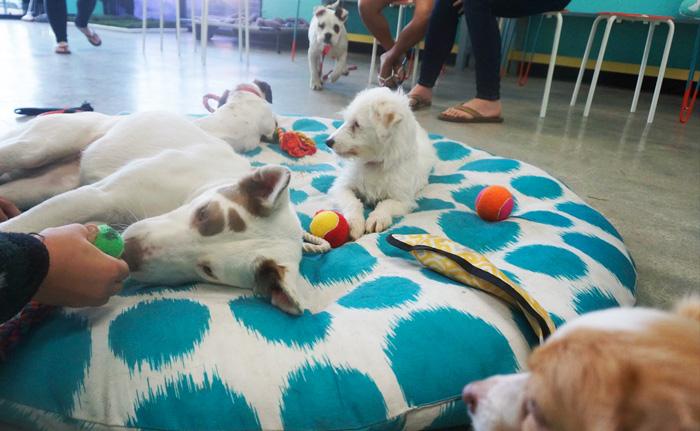 dog-cafe-adoption-sarah-wolfgang-los-angeles-27