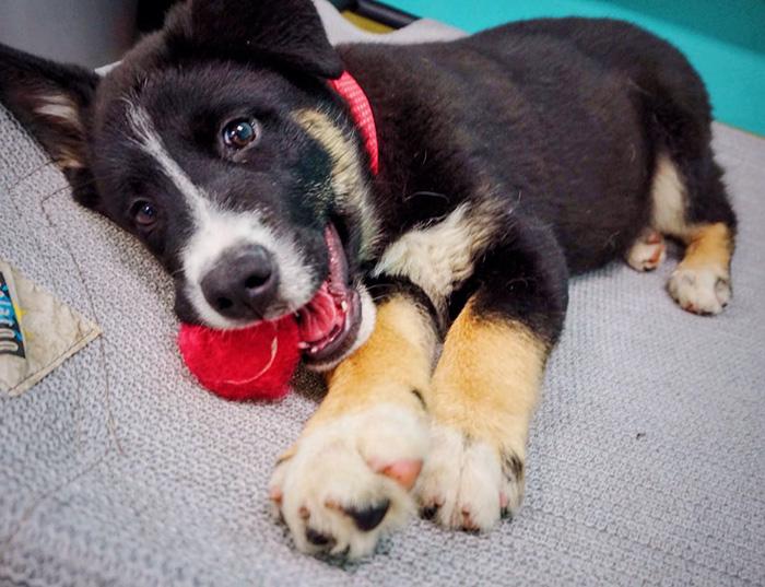 dog-cafe-adoption-sarah-wolfgang-los-angeles-3