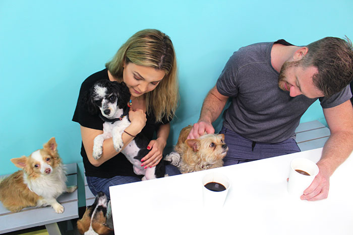 dog-cafe-adoption-sarah-wolfgang-los-angeles-32