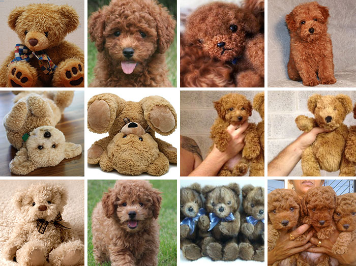 Puppy Or Teddy Bear?