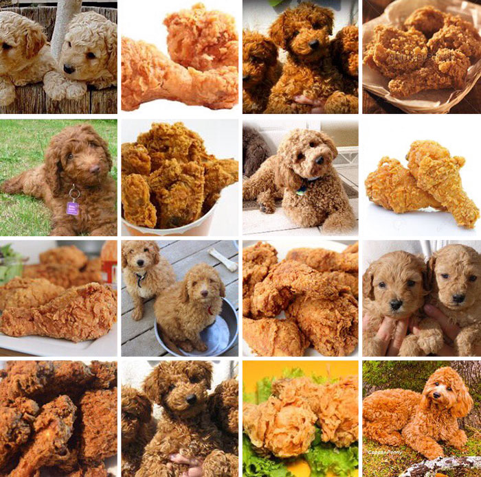 Labradoodle Or Fried Chicken?
