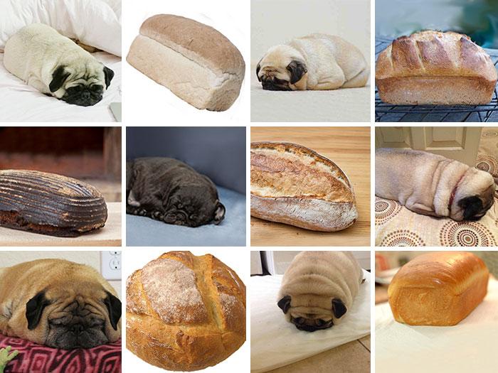 Pug Or Loaf