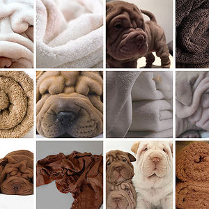 Shar-Pei Or Towel?