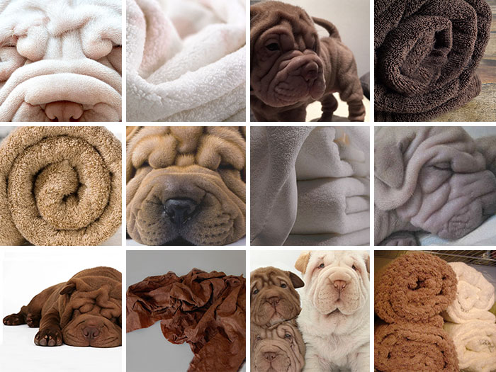 dog food comparison bagel muffin lookalike teenybiscuit karen zack 71__700 puppies or food? 8 pics that will make you question reality