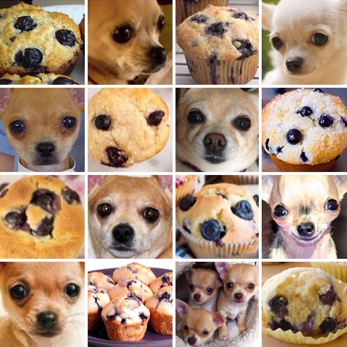 Puppies Or Food? 12 Pics That Will Make You Question Reality | Bored