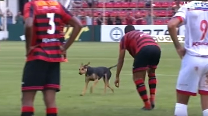 dog-interrupts-soccer-game-brazil-13