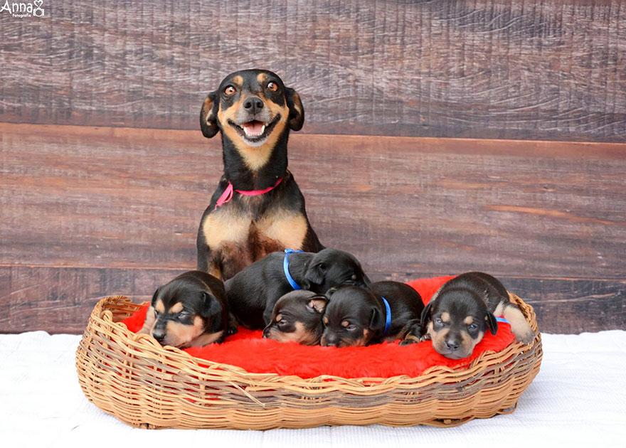 dog-maternity-photoshoot-puppies-lilica-ana-paula-grillo-1