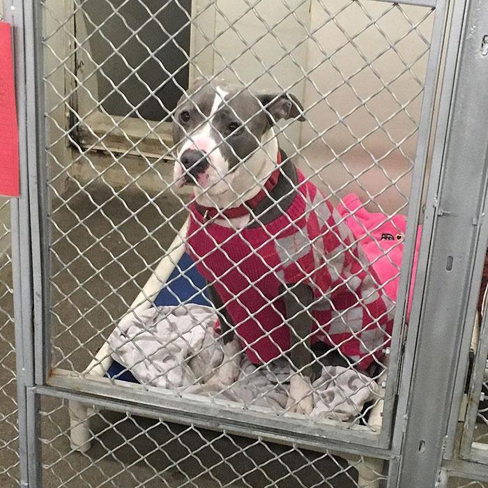 dog-shelter-removes-breed-labels-adoption-pitbulls-arizona-10