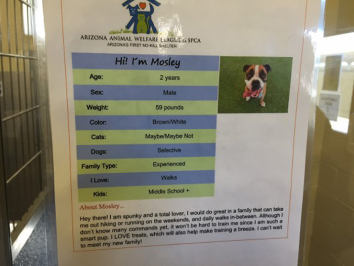 dog-shelter-removes-breed-labels-adoption-pitbulls-arizona-2