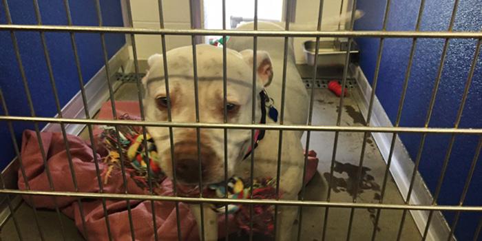 dog-shelter-removes-breed-labels-adoption-pitbulls-arizona-3