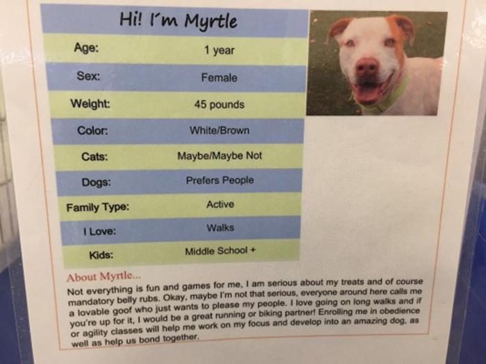 dog-shelter-removes-breed-labels-adoption-pitbulls-arizona-6