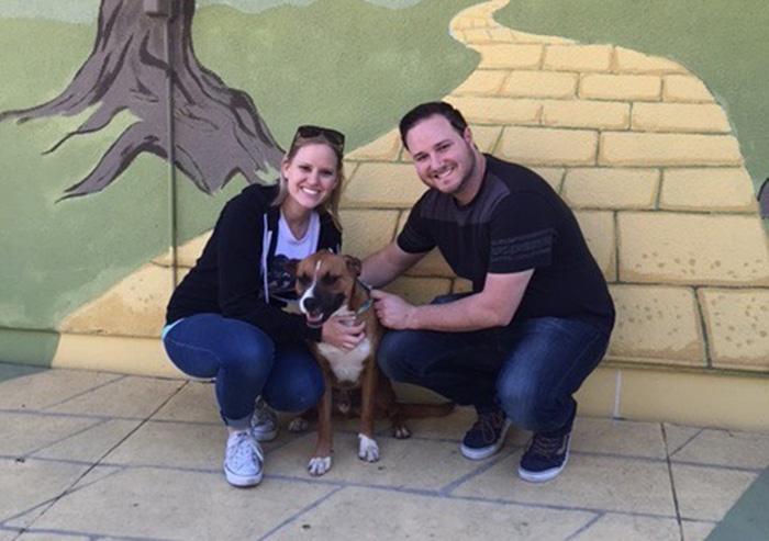 dog-shelter-removes-breed-labels-adoption-pitbulls-arizona-7