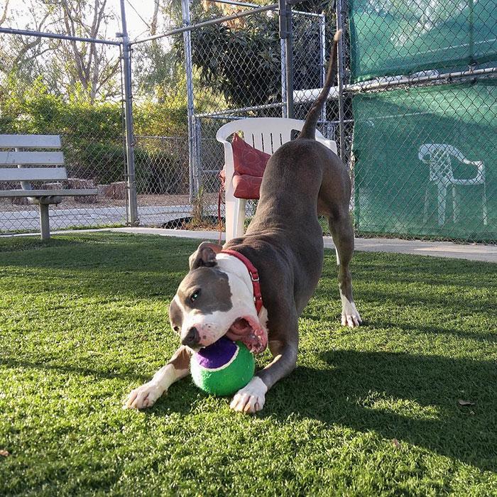 dog-shelter-removes-breed-labels-adoption-pitbulls-arizona-9