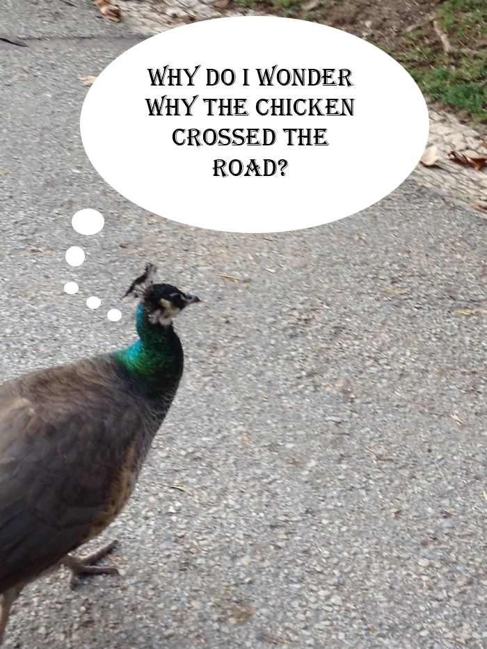 Existential Peacock