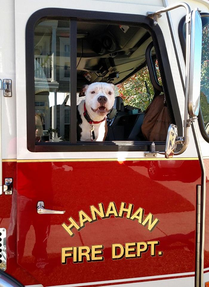 firefighter-dog-burn-victim-mascot-jake-william-lindler-11