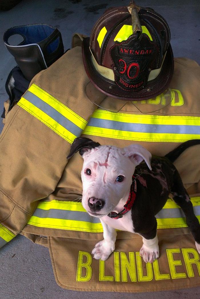 firefighter-dog-burn-victim-mascot-jake-william-lindler-18