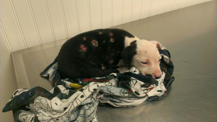 firefighter-dog-burn-victim-mascot-jake-william-lindler-22