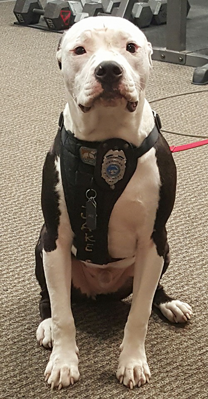 firefighter-dog-burn-victim-mascot-jake-william-lindler-9