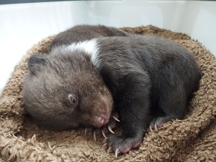 Forest Rangers Save Orphaned Bear Cubs