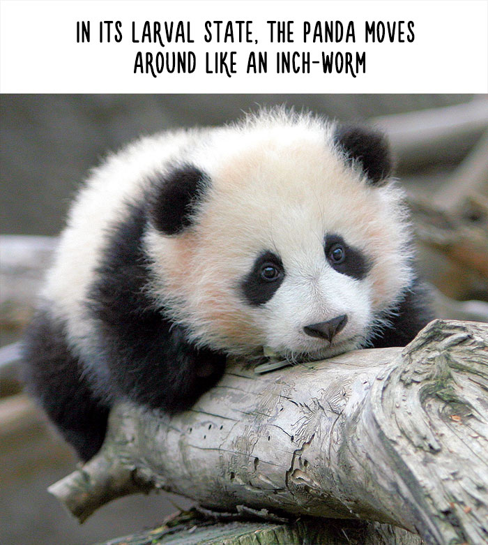 Funny Animal Facts