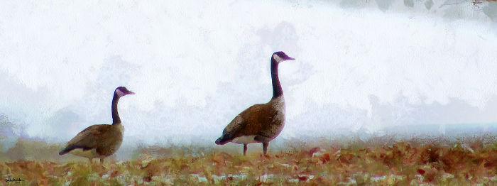 Geese & Marriage & Fun, Fun, Fun