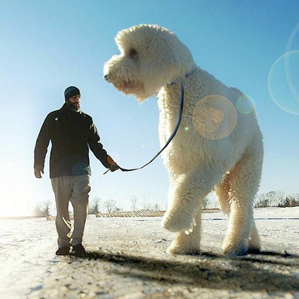 giant-dog-photoshop-adventures-juji-christopher-cline-81