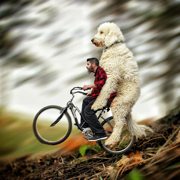 giant-dog-photoshop-adventures-juji-christopher-cline-86