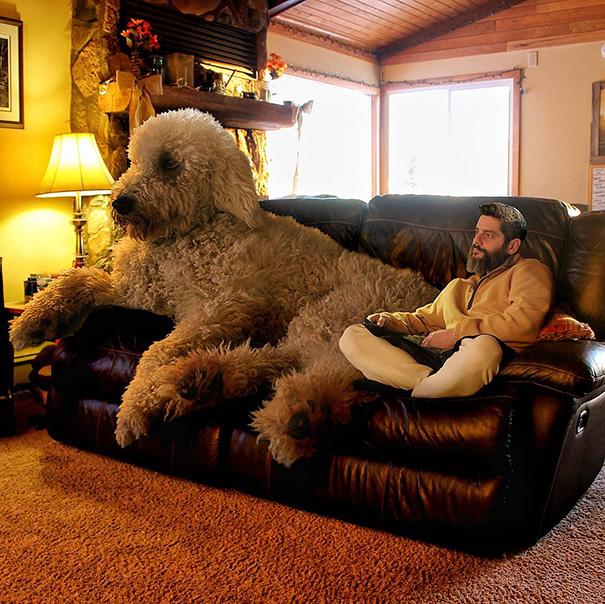 Um fotógrafo e seu cão gigante