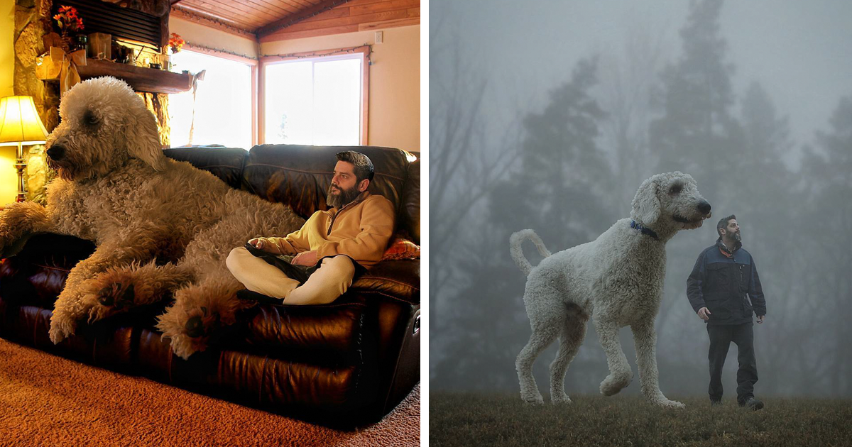 Photographer Photoshops His Dog Into A Giant Bored Panda - Guy uses photoshop to turn his miniature dog into a giant
