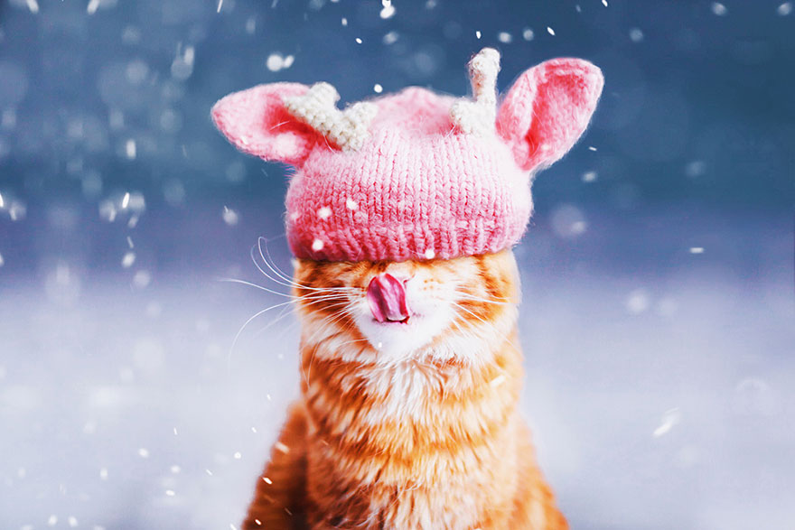ginger-cat-photography-kotleta-cutlet-kristina-makeeva-hobopeeba-10