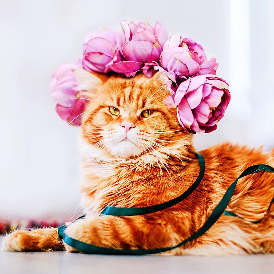 ginger-cat-photography-kotleta-cutlet-kristina-makeeva-hobopeeba-14