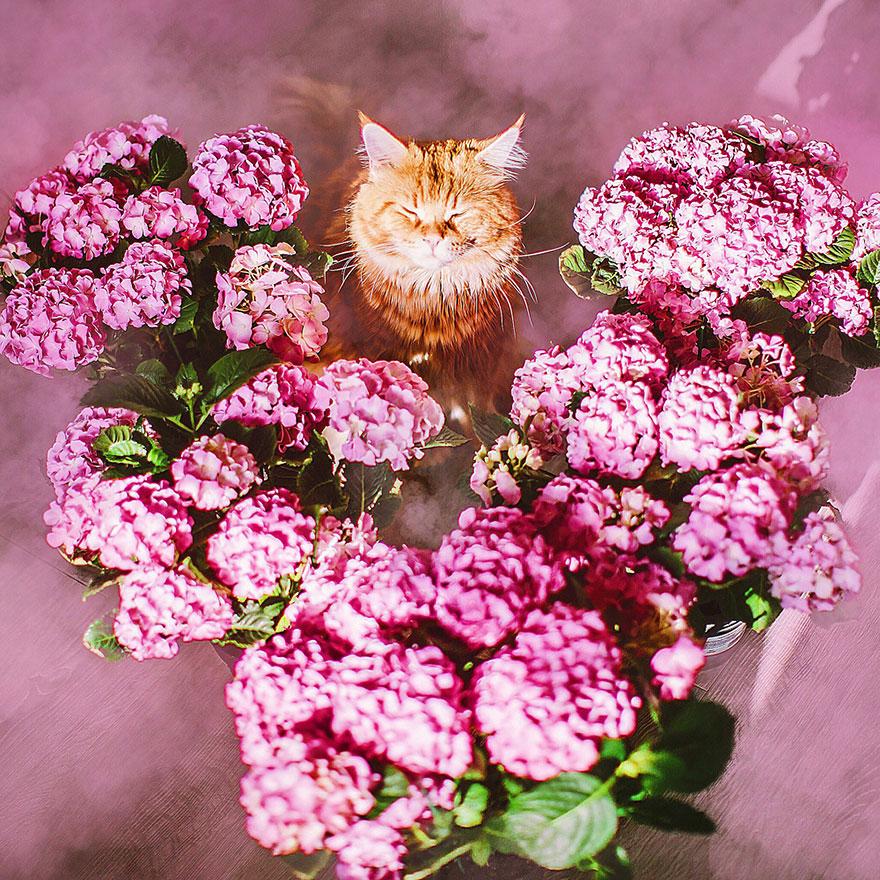 ginger-cat-photography-kotleta-cutlet-kristina-makeeva-hobopeeba-16