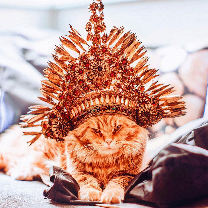ginger-cat-photography-kotleta-cutlet-kristina-makeeva-hobopeeba-17