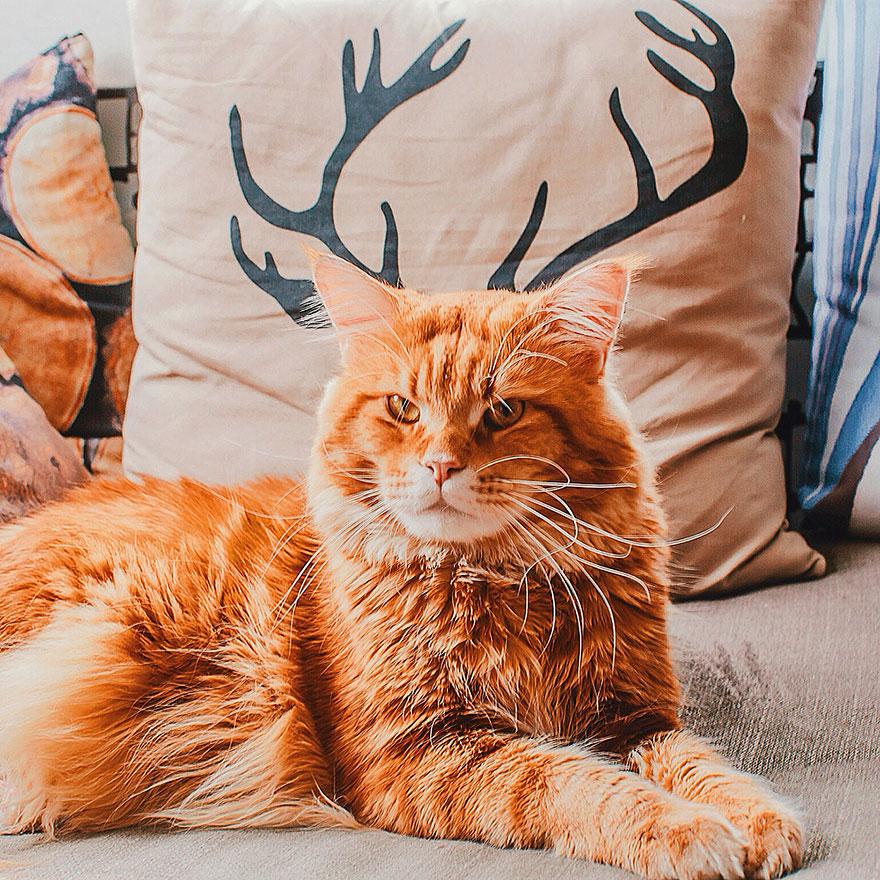 ginger-cat-photography-kotleta-cutlet-kristina-makeeva-hobopeeba-19