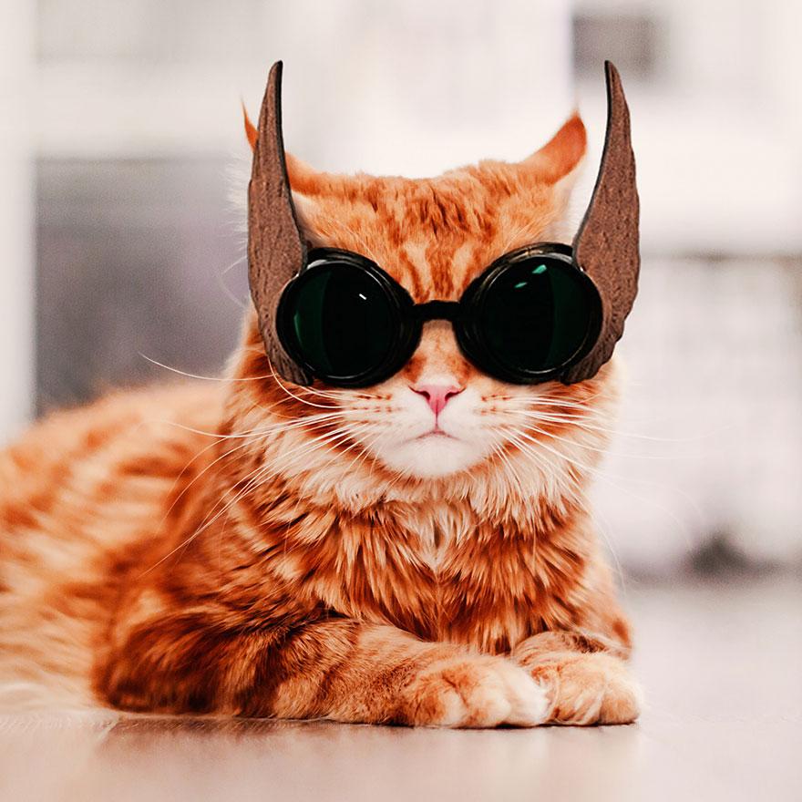 ginger-cat-photography-kotleta-cutlet-kristina-makeeva-hobopeeba-21